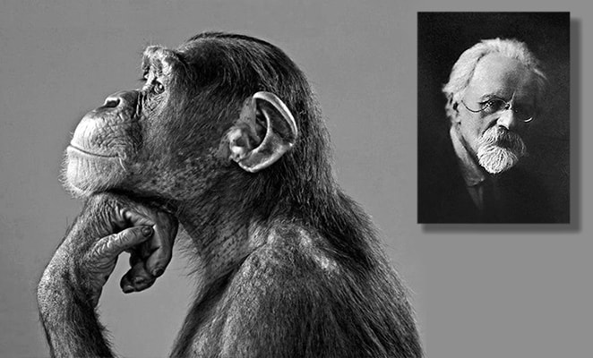 Илья Иванович Иванов и шимпанзе